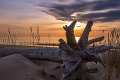 Lange duinen met gespoelde boomboomstam en een breed hieronder strand stock afbeeldingen