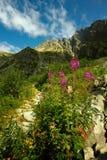 Lange fluweelbloem door steenbergen Royalty-vrije Stock Foto