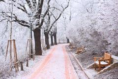 Lange Gasse mit den Bänke und Bäumen bedeckt im Eis Lizenzfreie Stockfotos