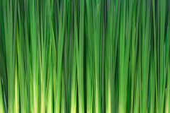 Lange grasachtergrond Stock Afbeeldingen