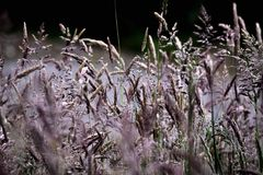 Lange Grassen Stock Foto