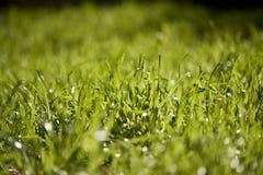 Het Gras van het lange Aanwijsstokje Royalty-vrije Stock Foto's