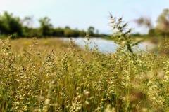 Lange grasweide Stock Foto's
