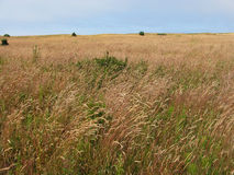 Lange Graswiese Stockfotografie