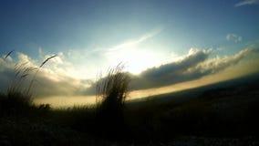 Lange graswind en zon in timelapse stock videobeelden