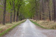 Lange Grintweg door Park Forest Straight Trees Arching Autu royalty-vrije stock fotografie