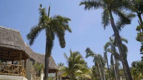 Lange groene palmenslingering tegen de hemel 4K stock videobeelden