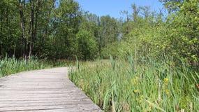 Lange Holzbrücke und Sumpfgebiet Lizenzfreies Stockfoto