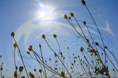 Lange installaties die in de wind in de zon drijven Royalty-vrije Stock Fotografie