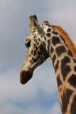 Lange lange giraf Stock Afbeeldingen