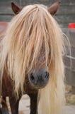 Lange Mähnen des Brown-Ponys Stockfotos