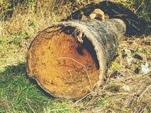 Lange metaalpijp die op grond leggen Gebroken roestige staalbuis stock foto's