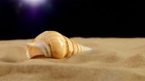 Lange overzeese shell met zand op zwarte, omwenteling, sluit stock footage