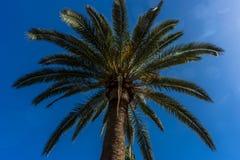Lange palm in Alhambra, Granada, Spanje, Europa royalty-vrije stock foto's