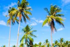 Lange palm op tropisch eiland Blauwe hemel en zonnig weer royalty-vrije stock foto