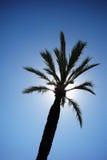 Lange palm tegen zonnige hemel Stock Foto's