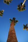 Lange Palmen Stock Afbeeldingen