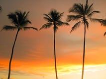 Lange palmen op de achtergrond van de zonsonderganghemel Royalty-vrije Stock Foto