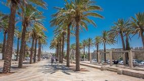 Lange palmen op de Tuin die van Steegmish ` ol HaPninim tot de Poort van Damascus timelapse hyperlapse in de Oude Stad van Jeruza stock video