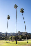 Lange Palmen op Golfcursus Royalty-vrije Stock Afbeeldingen