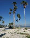 Lange palmen op het strand Stock Afbeeldingen