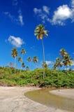 Lange palmen op het strand van La Sagesse Stock Foto's