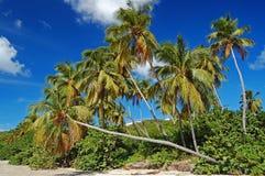 Lange palmen op het strand van La Sagesse Stock Afbeeldingen