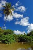 Lange palmen op het strand van La Sagesse Stock Fotografie
