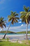 Lange palmen op het strand van La Sagesse Stock Foto