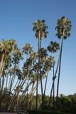Lange palmen tegen een blauwe hemel in de stad van Malaga, Spanje, Europa Stock Afbeeldingen