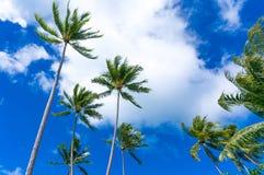 Lange palmen tegen een blauwe hemel en witte wolken Stock Foto