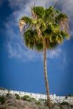 Lange palmtree Royalty-vrije Stock Fotografie
