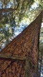 Lange pijnboom met houten teken royalty-vrije stock afbeeldingen