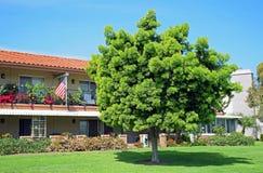 Lange Podocarpus boom royalty-vrije stock afbeelding