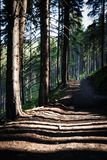 Lange schaduwen op een bosweg Royalty-vrije Stock Foto