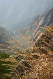 Lange Schilfe auf Bergabhang Lizenzfreies Stockfoto