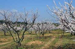 Frühlingslandschaft mit Starkstromleitung Stockbild