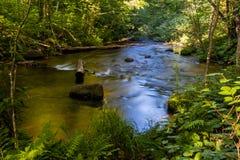 Lange See-Niederlassung des White Rivers Lizenzfreie Stockfotos