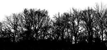 Lange Shadowtrees Royalty-vrije Stock Foto