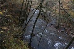 Lange staartrivier binnen het bos en de bergen stock fotografie