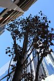 Lange Stadsgebouwen Royalty-vrije Stock Foto