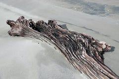 Lange strandgolvenhout bij Ohope-strand in Whakatane, Nieuw Zeeland stock foto's