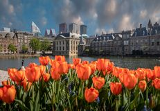Parlement buildings combinate with dutch tulips. Royalty Free Stock Photography