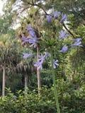 Lange waardige bloemenschoonheid stock afbeelding