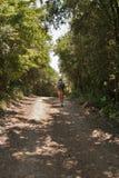 Lange Wanderung im Wald Lizenzfreie Stockfotos