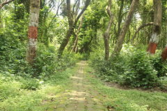 Lange weg in tuin onder boom stock fotografie
