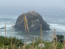 Lange wheatgrass en groen gebladerte in feont van reuzerots in Vreedzame Oceaan op de Kust van Oregon royalty-vrije stock foto's