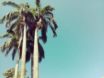 Langer Baum Stockbilder