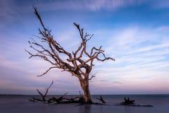 Langer Belichtungstreibholzstrand in Jekyll-Insel stockfotografie