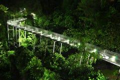 Langer gerader Gehweg in einem Wald Stockfotos